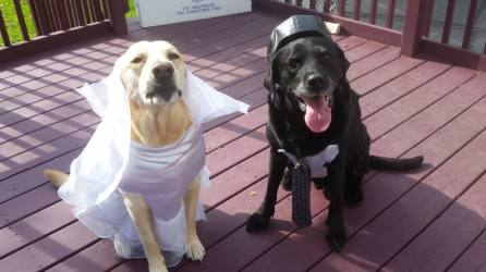 Toby and Molly - Bride & Groom (Bonnie Doughty)