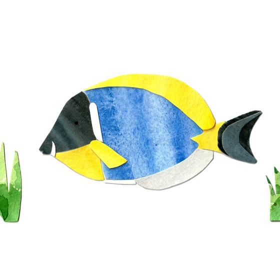 Powder Blue Tang Assembled Watercolor Painting by Cortney North