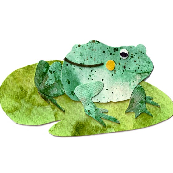 Bull Frog Assembled Watercolor Painting by Cortney North