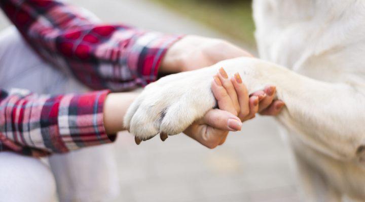 Curso Adestramento Descomplicado é bom pra cachorro! Confira 3 Aulas GRÁTIS
