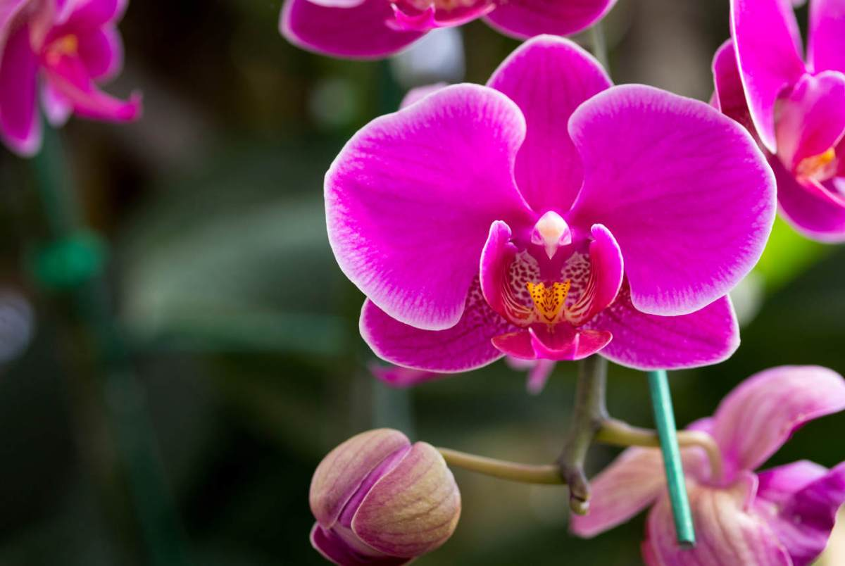 curso orquídeas sem segredos