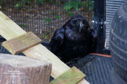Raven Zarathustra in her release aviary.