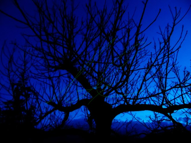 Cory-Castillon-Night-Tree