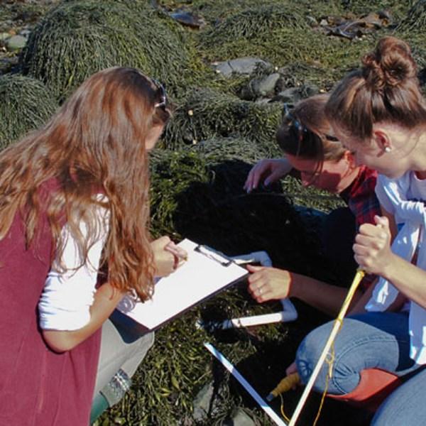 Students observe sea life on rocks.