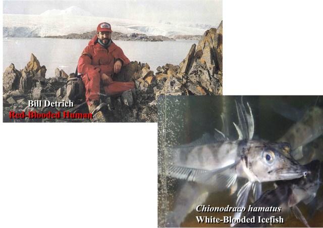 Professor William Detrich in Antarctica where he studies icefish.