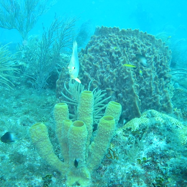 reef with sponge, coral, fish