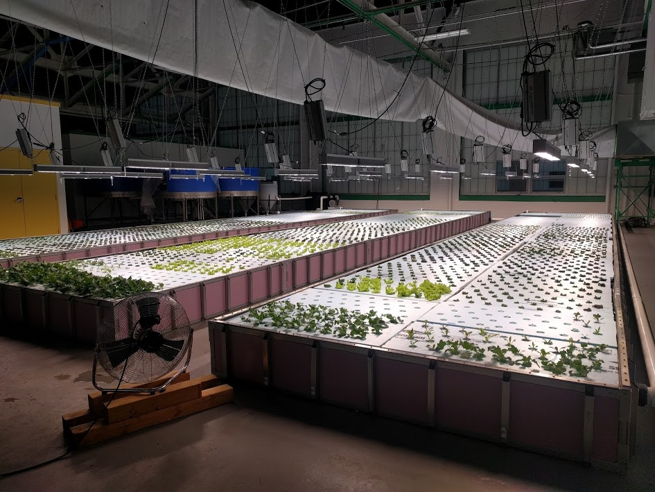 Northeastern alumnus leads the way in aquaponics research