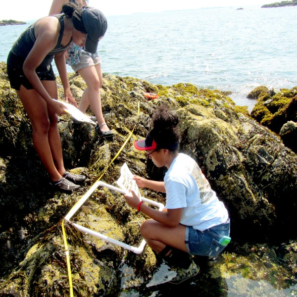 Students study the Gulf of Maine's rocky intertidal zone as part of a course focusing on how different societies around the world are responding to coastal issues. Courtesy photo Brian Helmuth