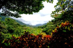 A view of rainforest from VerdEnergia. Photo by Hiroko Tanaka for Northeastern University