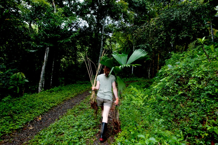 Jessica Slevin, who studies conservation science at Northeastern, carries bamboo sticks, a palm tree, and a banana tree to plant. Photo by Hiroko Tanaka for Northeastern University