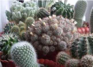 cuidado de cactus en interior #Jardineria #Jardin #Suculentas #Cactus