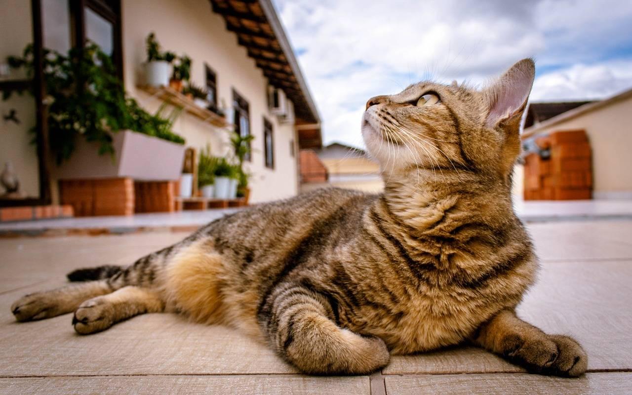 ¿Cuánto cuesta tener un gato? El desglose anual de los costos de tener un gato
