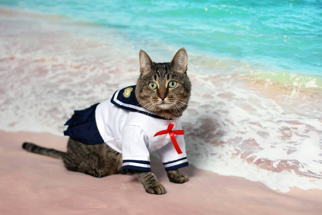 10 mejores disfraces para gatos de los que te enamorarás