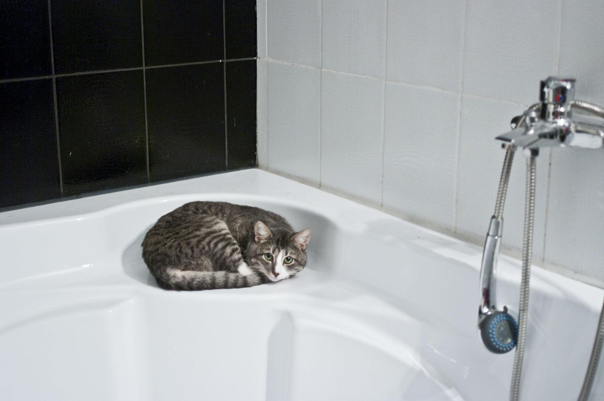 Por que a los gatos no les gusta el agua