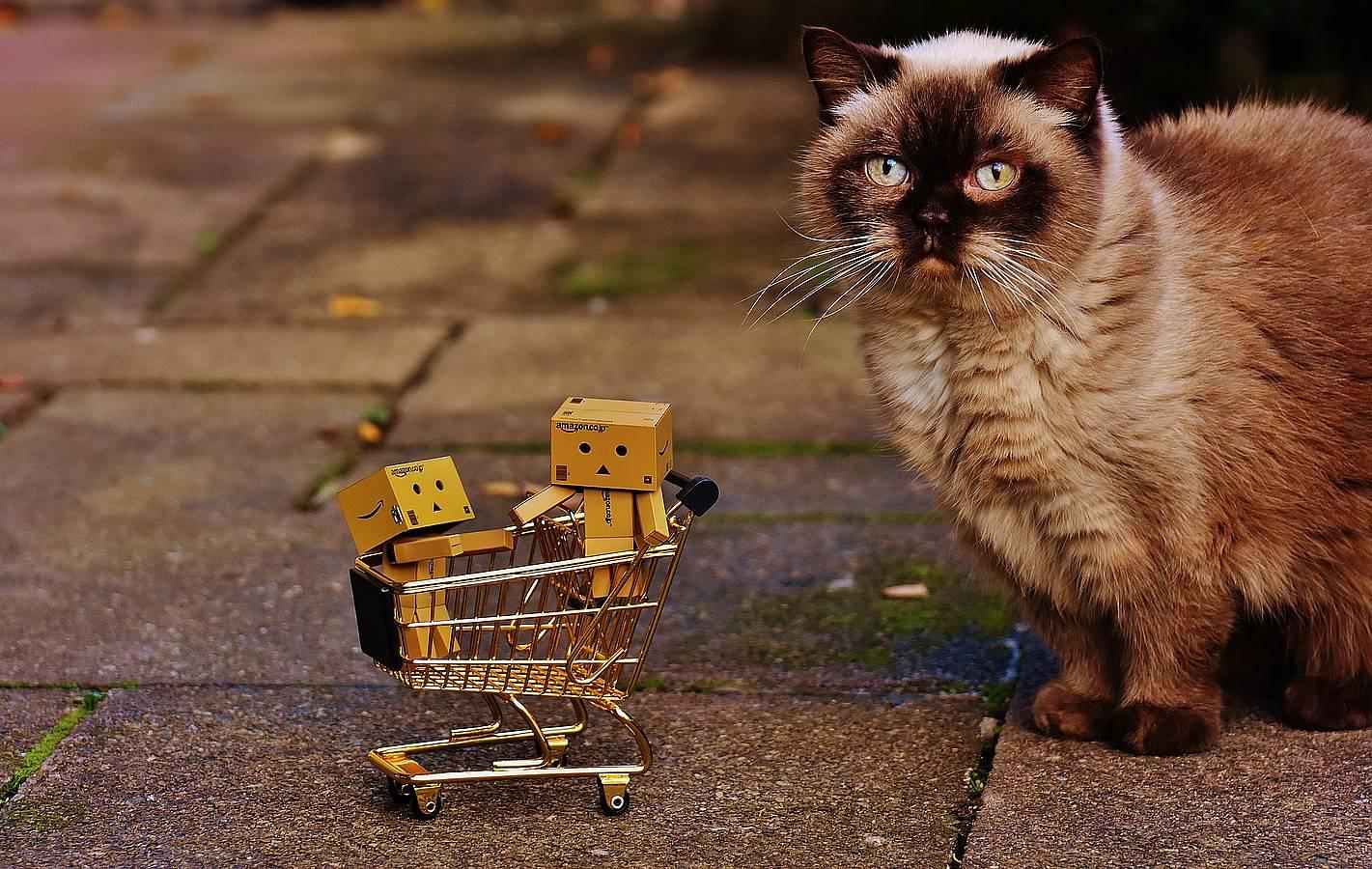 Regalos para los amantes de los gatos
