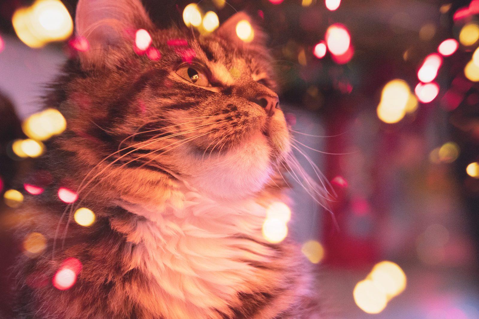 Seguridad contra incendios para gatos