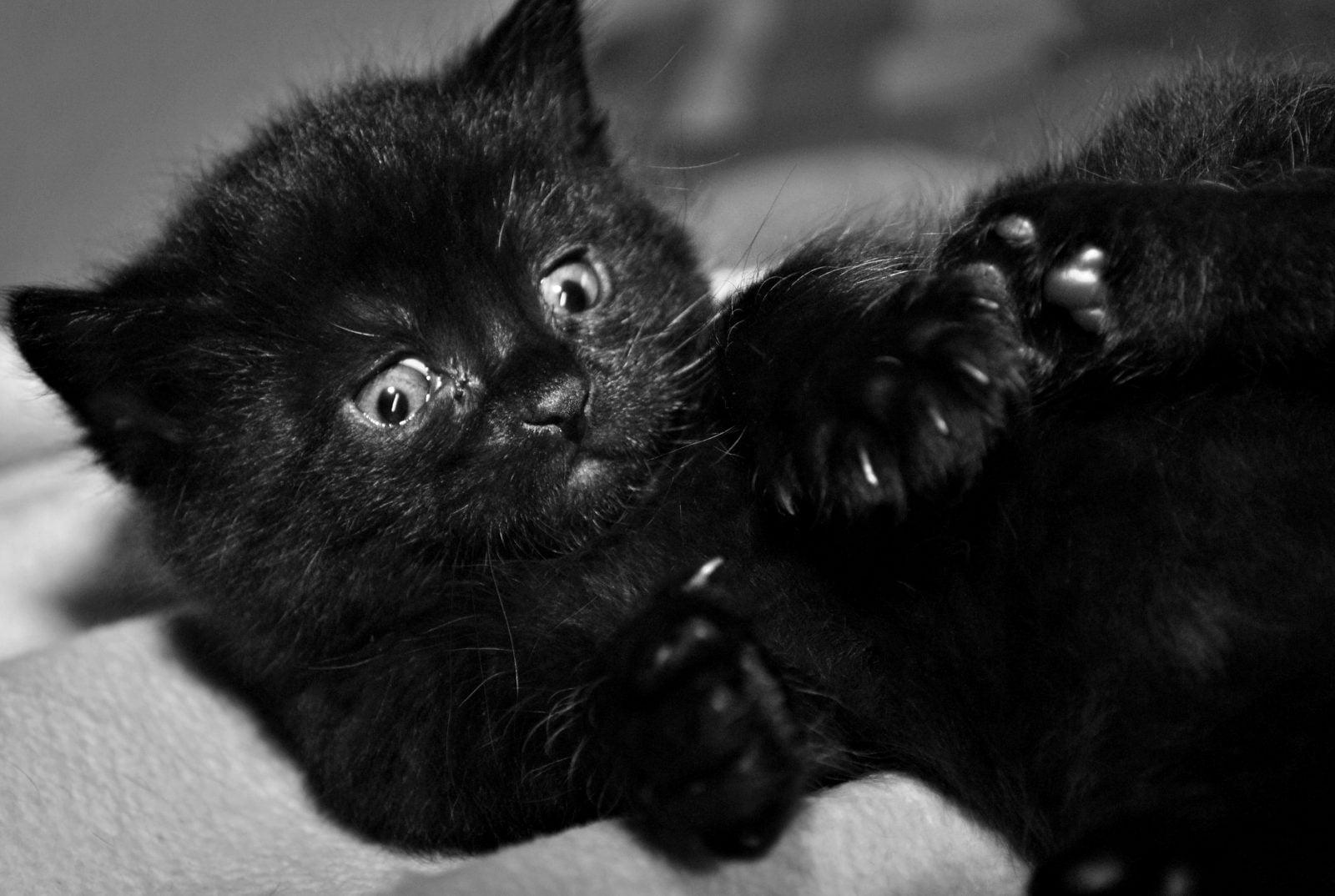 Los mejores cortaúñas para gatos