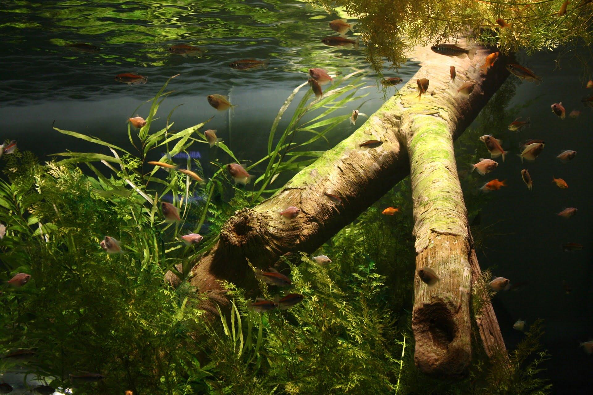Consejos para bajar el PH del acuario de agua dulce