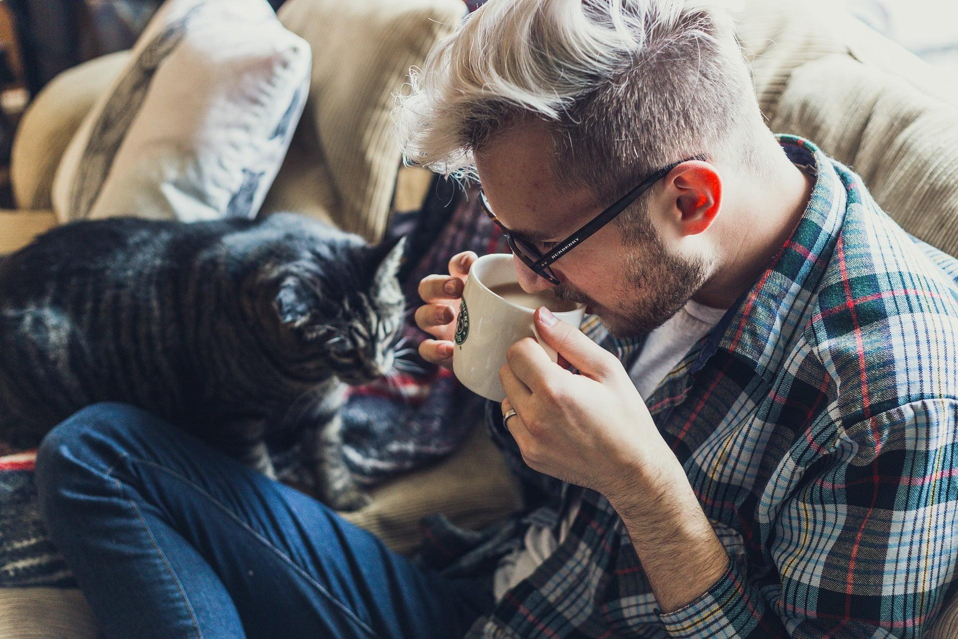 ¿Cómo demuestran afecto los gatos?