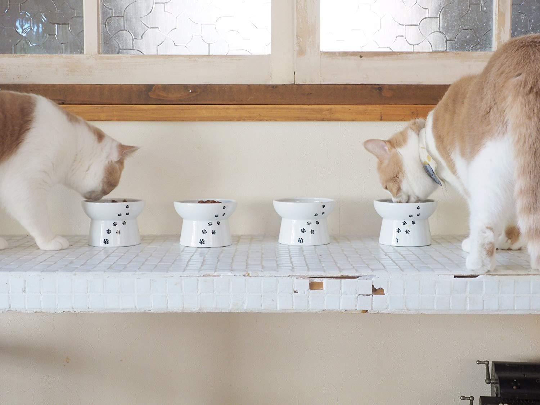 Comedero elevado para gatos de Necoichi