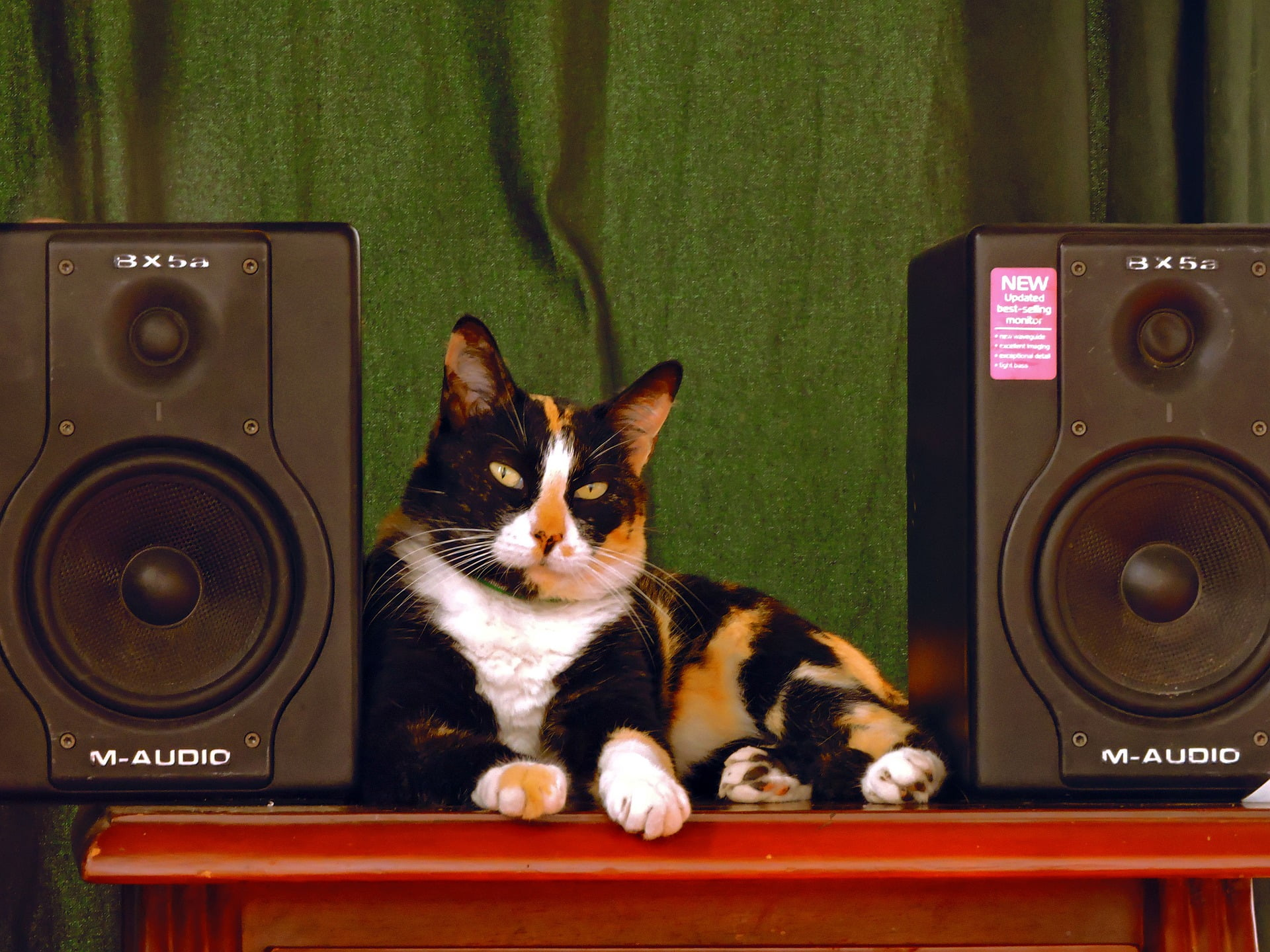 ¿A los gatos les gusta la música? ¿De qué tipo disfrutan?