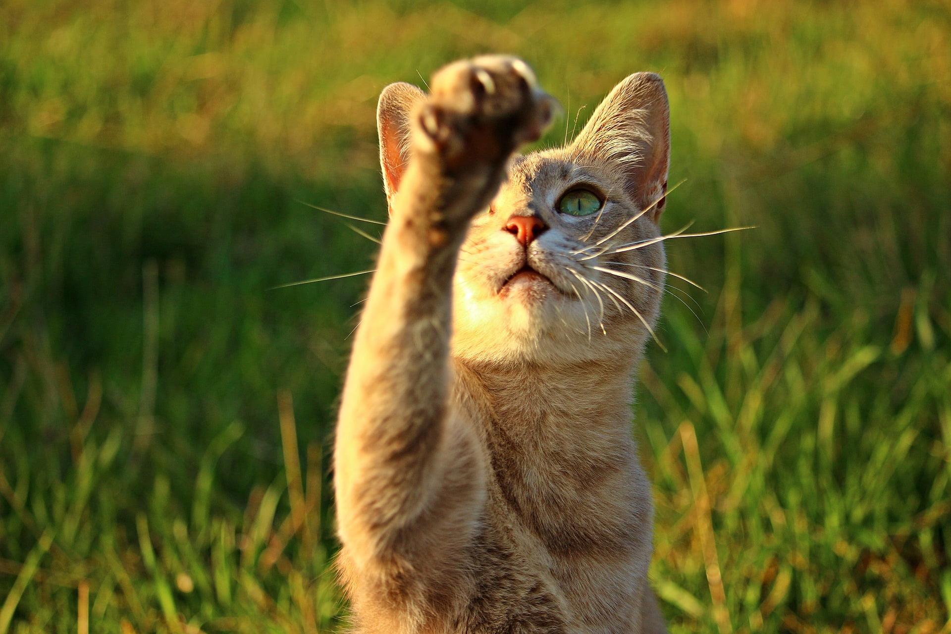 ¿Por qué los gatos tiran cosas? ¿Y qué puedes hacer al respecto? 1