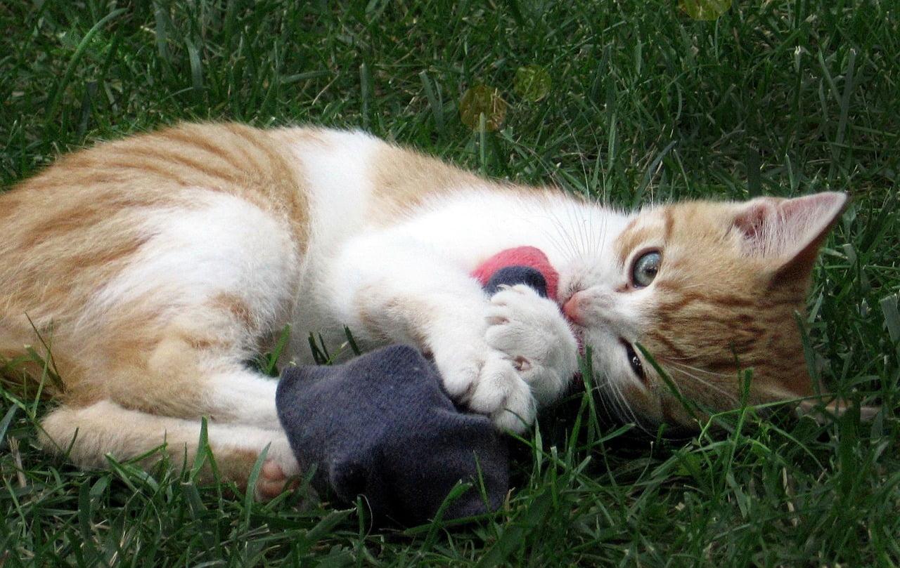 5 simples juegos para gatos por los que tu gatito se volverá loco