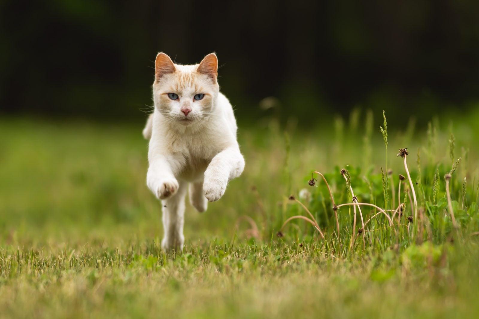 Ejercicio para gatos: Manteniendo a tu gatito en buena forma