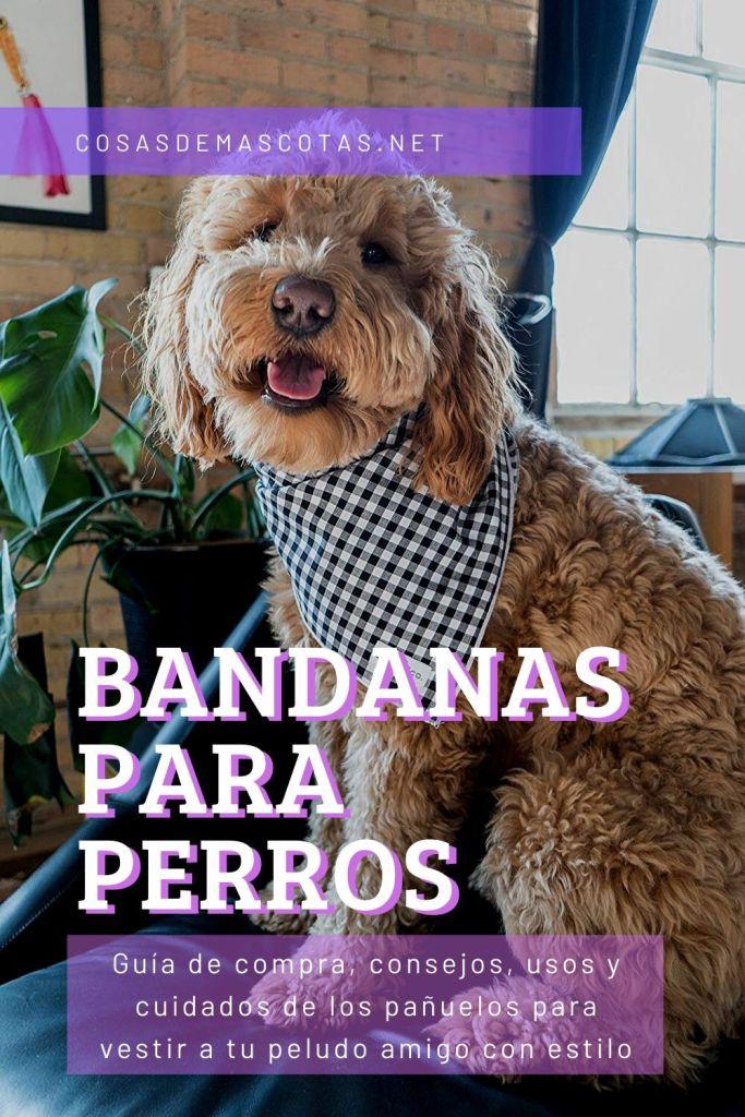Comprar bandanas para perros