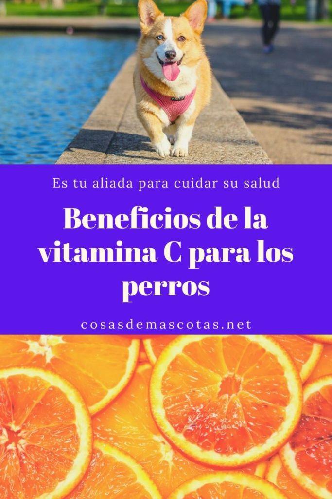 Beneficios de la vitamina C para los perros