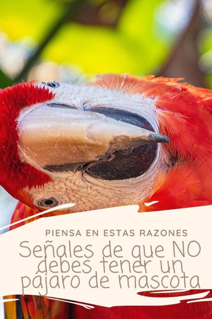 Signs You Should NOT Get a Pet Bird