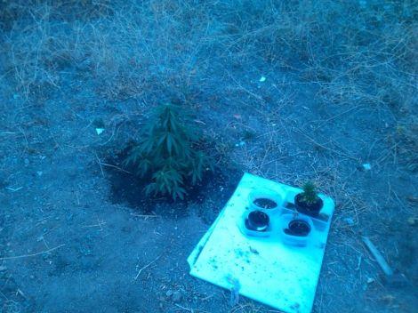 plantas robadas2