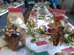 Exposición jornadas micologicas en los toriles-2