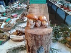 Exposición jornadas micologicas en los toriles-4
