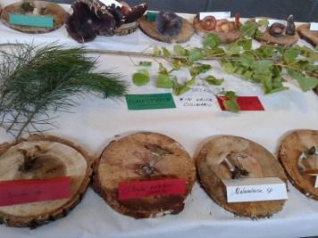 Exposición jornadas micologicas en los toriles-7