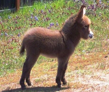 burros-bebes