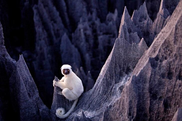 Este bosque alberga a 11 especies de lémures