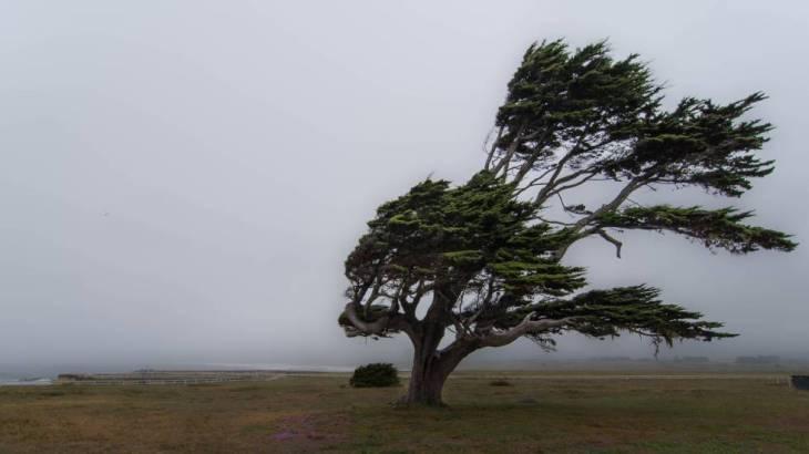Fuertes vientos en el campo