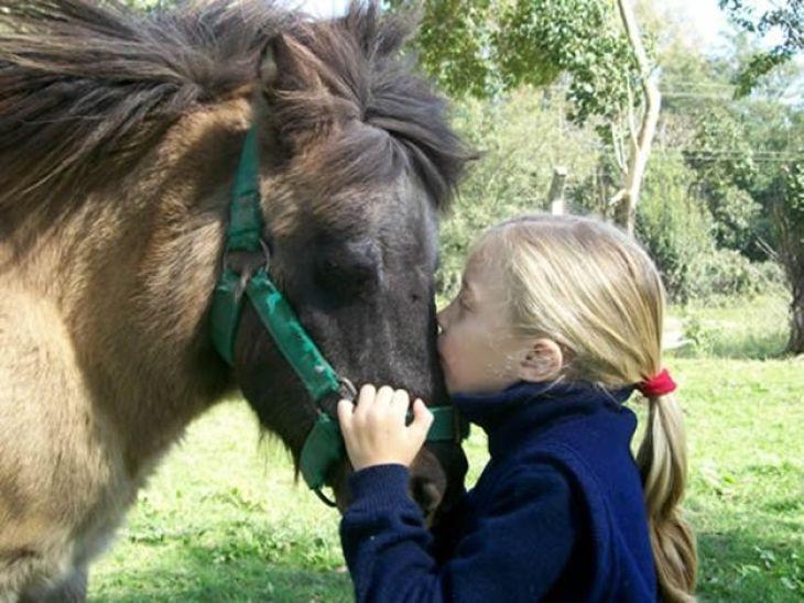 Los caballos son capaces de sentir emociones y reaccionar ante ellas