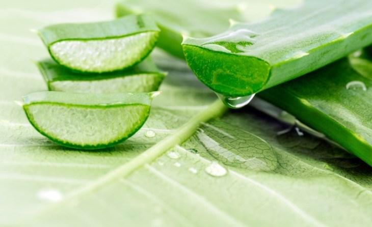 Aloe vera como remedio casero para mantener la piel humectada