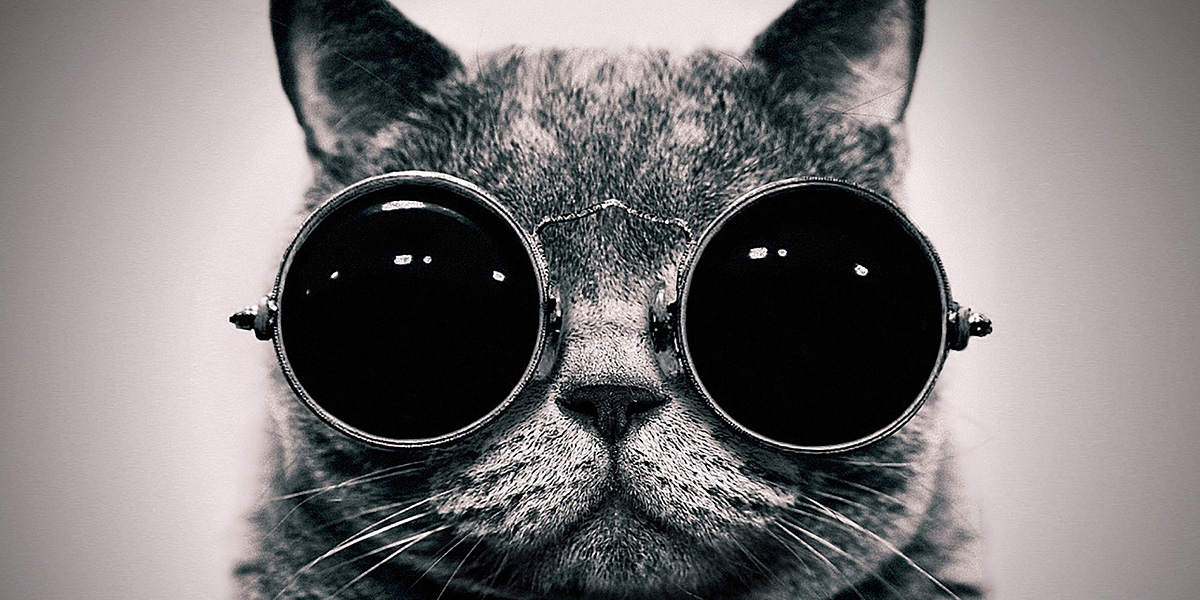 Glasses-Cat