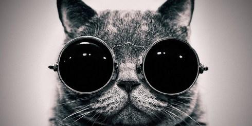 Glasses-Cat