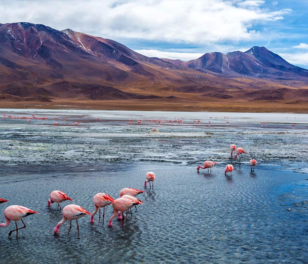 Travel in 2018 • Lake Hedionda, Bolivia © Shutterstock