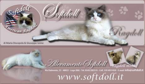 softdoll.it