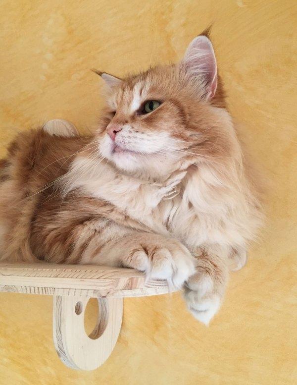 ripiano robusto, adatto anche a gatti grandi