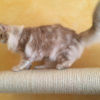 M'arrampico – Tronchetto rivestito di sisal