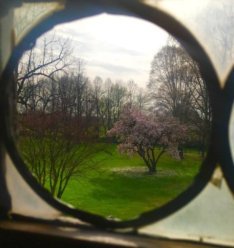 Magnolia in girore