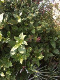 Vegetazione su Isola di Loreto