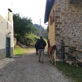Lama delle Ande scuderia della Valle