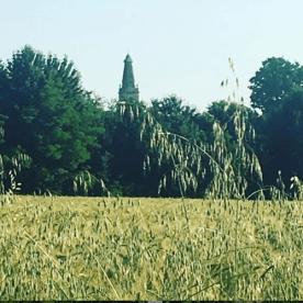 Bonate Sotto - campi dietro casa